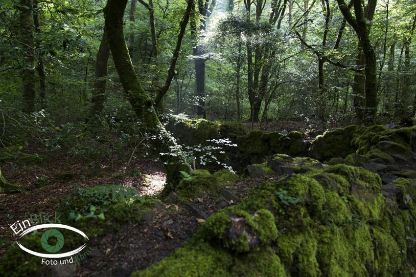 Dartmoor 23
