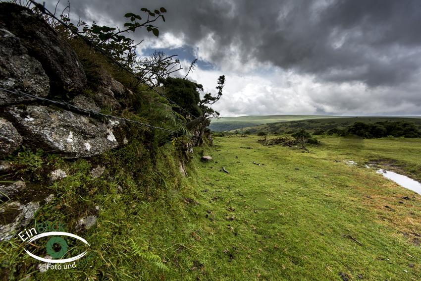 Dartmoor 21