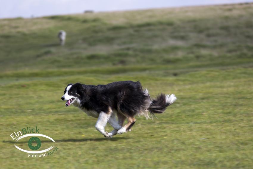 Dartmoor 09