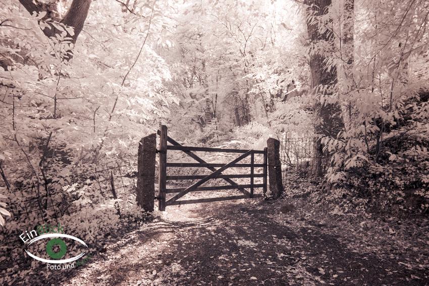 Dartmoor - Infrarot 08