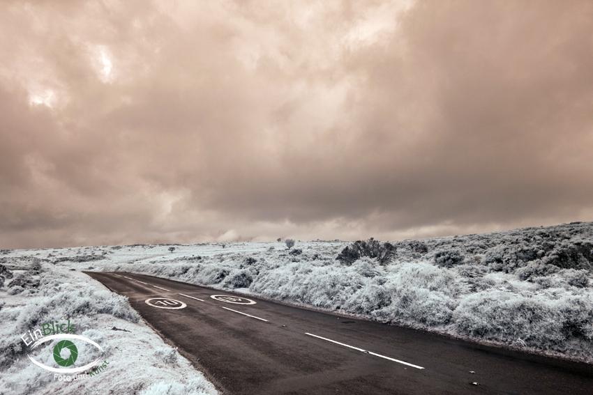 Dartmoor - Infrarot 07