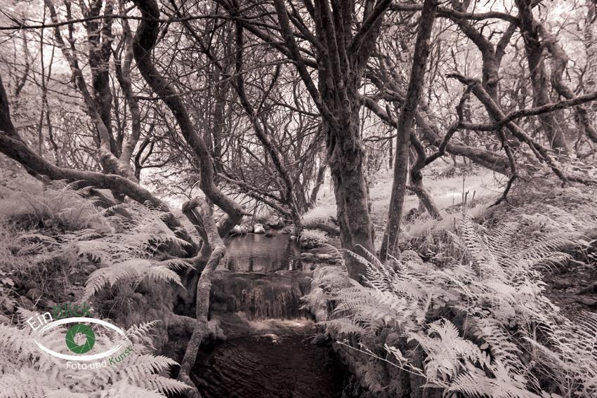 Dartmoor - Infrarot 06
