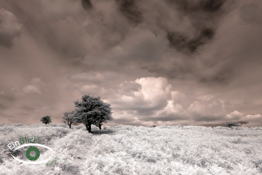 Dartmoor - Infrarot 05
