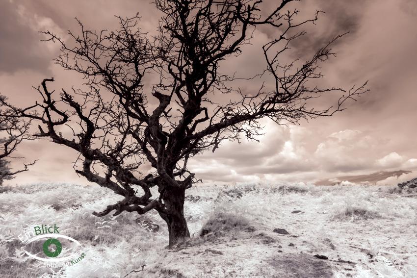 Dartmoor - Infrarot 04
