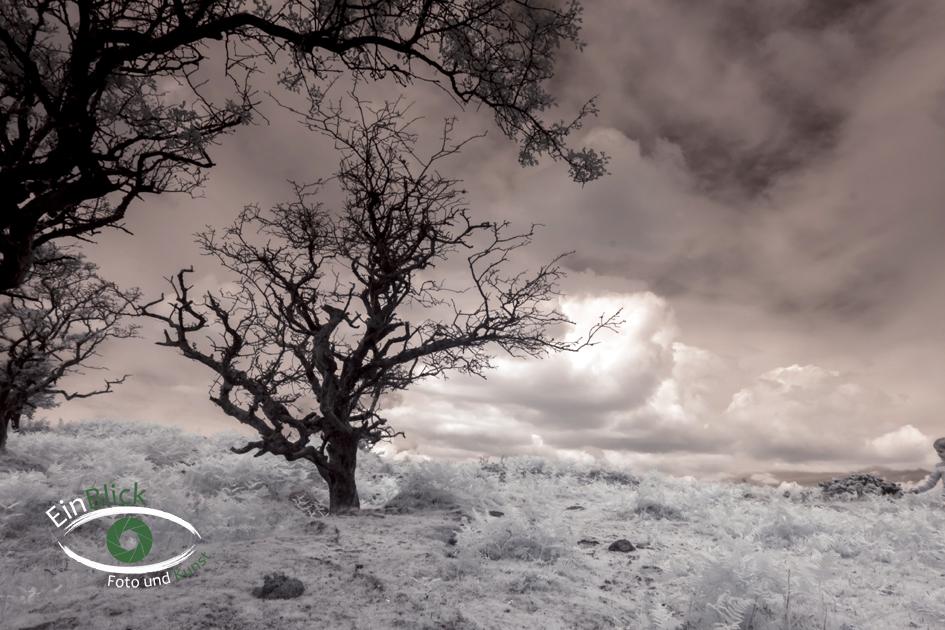 Dartmoor - Infrarot 03