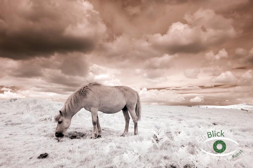 Dartmoor - Infrarot 02