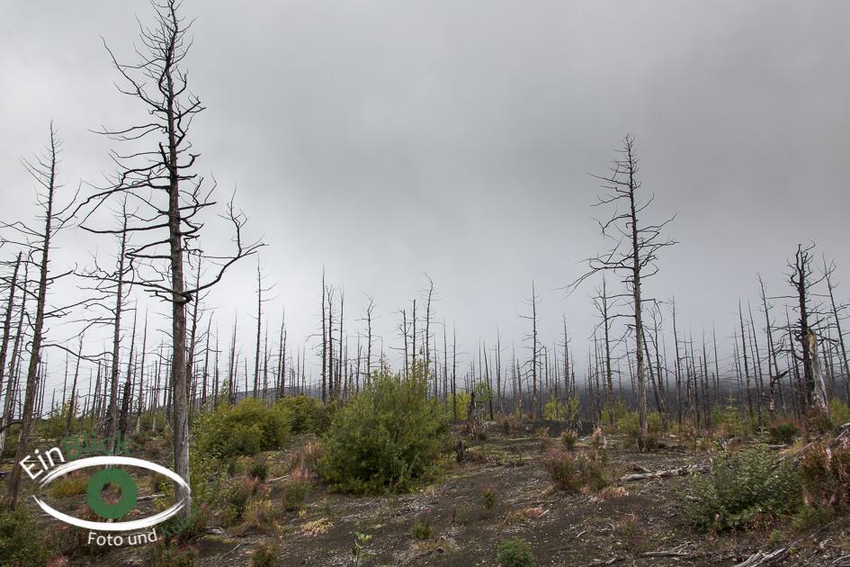 Kamtschatka 2014 (26 von 71)