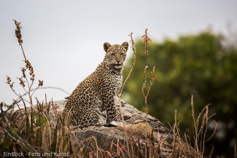 www Tansania (1 von 1)-2