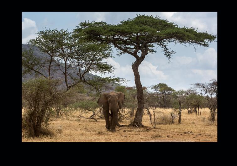 www 22 Tansania Serengeti