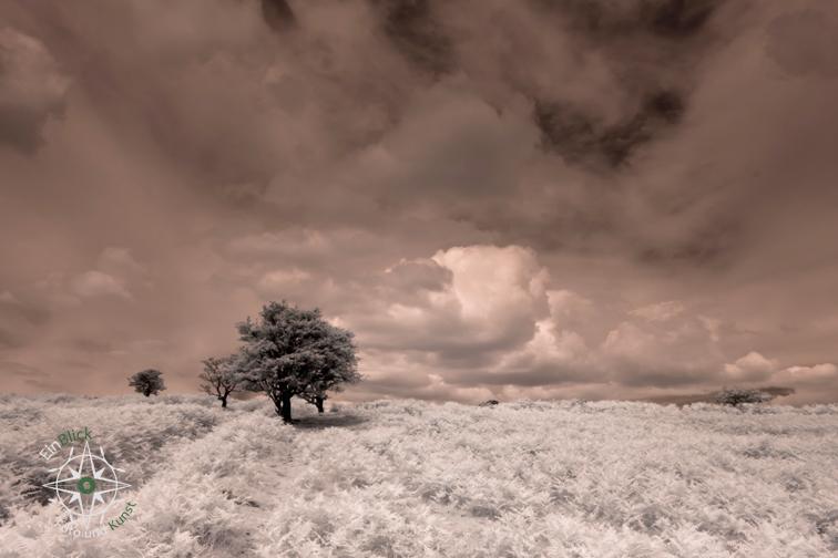 www dartmoor 05